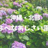 熱帯植物とのコントラストが綺麗!沖縄北部・よへなあじさい園の見ごろと見どころは?
